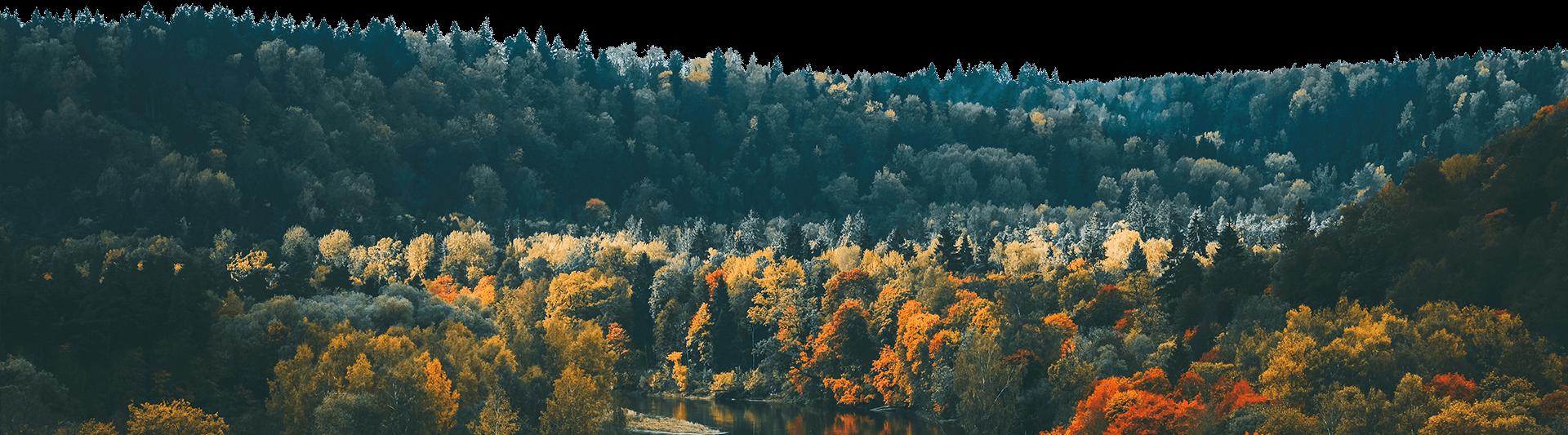 mežs rudenī